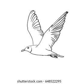 Vector hand drawn flying seagull, Line art illustration isolated on white background