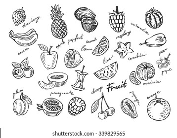 vector hand drawn fruit sketch doodle set