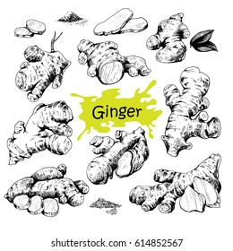 Vector hand drawn Ginger set. Roots, ginger pieces and sliced of ginger. Engraved style illustration. Herbal spice. Detox food ingredient.