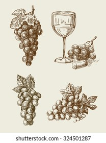 vector hand drawn grape sketch and vineyard doodle