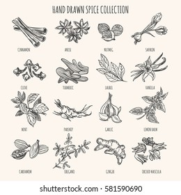 Vector hand drawn herbs, seasonings and seeds ingredients. Mint and cardamom, basil and vanilla spices sketch isolated on white background
