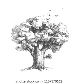Vector hand drawn illustration of big tree isolated on white background. Birds flying out of oak crown in sketch style.