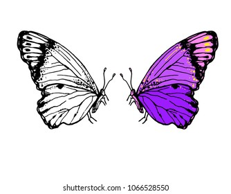 Vector hand drawn illustration of butterflies with folded wings. Black and white and color version for coloring book sketch style