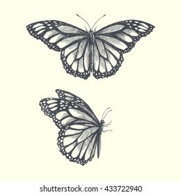 vector hand drawn illustration of butterflies with open and folded wings