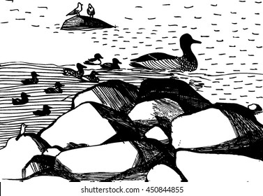 Vector hand drawn illustration with ducks in the lake. Black and white ink sketch. White background. Ducks and seagulls