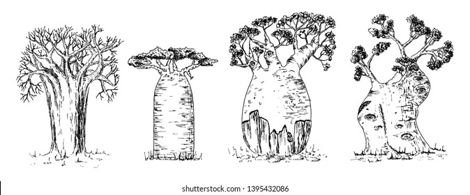 Baobab Tree Images, Stock Photos & Vectors | Shutterstock