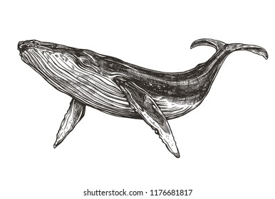 Baleine Images Photos Et Images Vectorielles De Stock