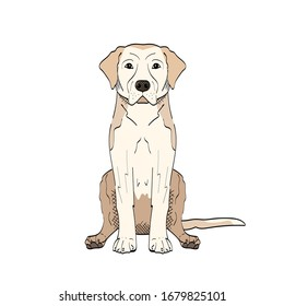 Vector hand drawn illustration of labrador retriever isolated on white background