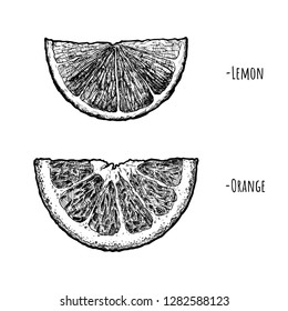 Vector hand drawn illustration of Lemon and orange wedges in vintage engraved style. isolated on white background.