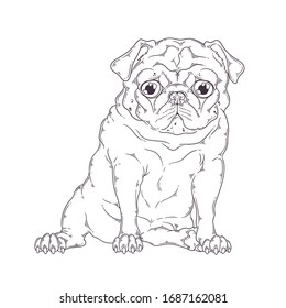 Vector hand drawn illustration. Portrait of the dog. The pug sits with a funny expression on his face. Each object can be changed and moved for your design.