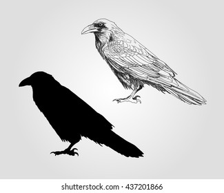 Vector hand drawn illustration of raven and silhouette