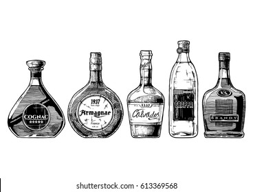 Vector hand drawn illustration set of different brandies types. Cognac, armagnac, calvados, Grappa and brandy. on white background