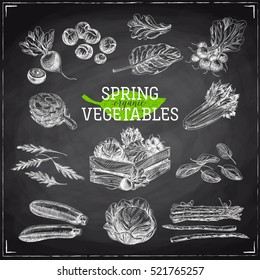 Vector hand drawn Illustration with spring vegetables. Organic and bio products food Sketch. Vintage style. Retro background. Chalkboard