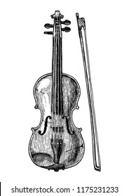 Vector hand drawn illustration of Viola in vintage engraved style. Isolated on white background. front view.