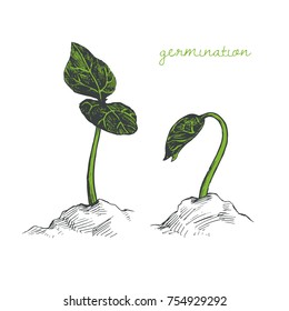 Vector hand drawn illustration with young sprouts in different phases of growth. Sketch of plants isolated on white