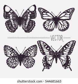 Vector hand drawn ink illustration. Tropical butterflies. Isolated clip art . Graphic design image for decoration. Engraving style, old fashioned, vintage picture. Nature objects. Entomology. Sketch