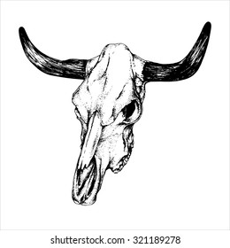 Vector hand drawn ink pen illustration. Cow (bull) skull isolated on a white background. Vintage picture.