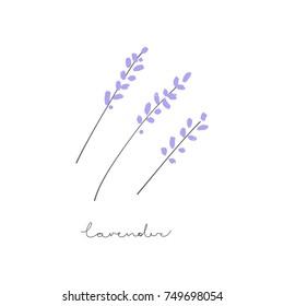 Vector hand drawn lavender.