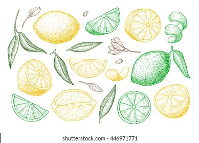 Vector hand drawn lemon set. Whole lemon, sliced pieces, half, leaf and seed sketch. Tropical summer fruit engraved style illustration. Detailed citrus drawing.