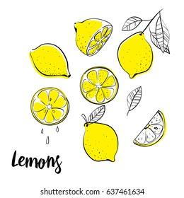 Vector hand drawn lemon. Tropical fruit. Sketch. Doodle. Perfect for summer design.