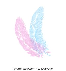 Vector hand drawn line art style feather for poster, banner, logo, icon. Fluffy feathers on transparent background in realistic style. Lightweight sketch illustration, for patterns