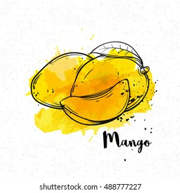 Vector hand drawn mango on a yellow watercolor background.