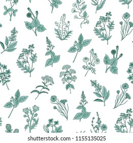 Vector hand drawn medical herbs pattern or background illustration. Green plant herb, medicinal ingredient, grass botany