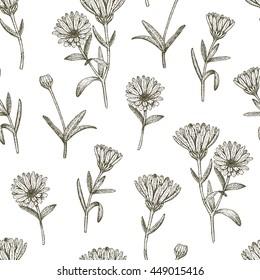 Vector hand drawn medicinal plant calendula seamless pattern. Sketch, drawing, illustration of calendula flower.