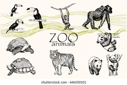 Vector hand drawn monochrome animals set. Zoo animals: toucan bird, chimpanzee, gorilla, panda, turtle.