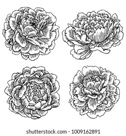 Vector hand drawn peonies silhouette set. Isolated flowers contour.