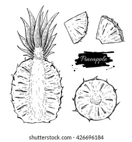 Vector hand drawn pineapple and sliced pieces set. Tropical summer fruit engraved style illustration. Detailed food drawing. Great for label, poster, print