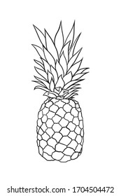 Vector hand drawn pineapple. Tropical summer fruit engraved style illustration. black and white