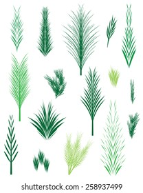 Vector hand drawn realistic leaves, stem, grass, palm leaf, needles, fir, bushes (also saved brushes on brush panel), decorative natural isolated elements