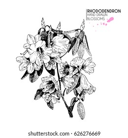 Vector hand drawn rhododendron twig. Isolated on white background. Engraved vintage botanical illustration. Use for wedding, birthday, party decoration, greeting cards, shop or brand promotion.