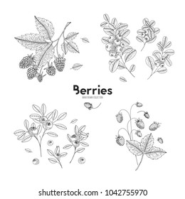 Vector hand drawn set of berries. Bluberry, raspberry, cranberry, wild strawberry. Engraved style vector illustration. Use for restaurant, menu, smoothie bowl, market, cafe recipes package design