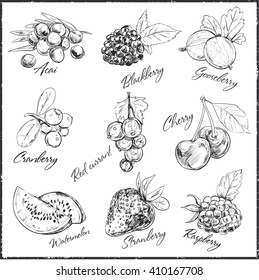 Vector hand drawn set of berries