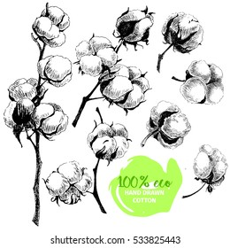 Vector hand drawn set of cotton branches. 100% eco. Cotton flower buds in vintage engraved style. Botanical art isolated on white background. Use for print, poster, decoration and other design.
