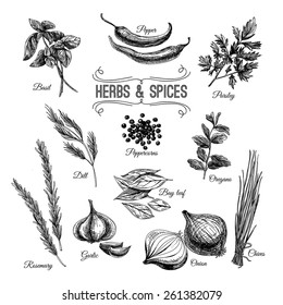 Vector hand drawn set with culinary herbs and spices. Sketch illustration.