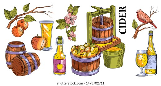 Vector hand drawn set in engraving style of apple branches, flowers, press, cask, apples, bottle with glass and bird. Colorful design for apple cider and juice. Isolated on white