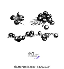 Vector hand drawn set of exotic fruits. Isolated acai berry set. Engraved art. Delicious tropical vegetarian objects. Use for restaurant, menu, smoothie bowl, market, store, party decoration, meal