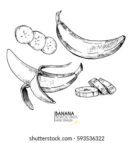 Vector hand drawn set of exotic fruits. Isolated banana. Engraved art. Delicious tropical vegetarian objects. Use for restaurant, menu, smoothie bowl, market, store, party decoration, meal