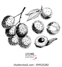 Vector hand drawn set of exotic fruits. Isolated lyvhee. Engraved art. Delicious tropical vegetarian objects. Use for restaurant, menu, smoothie bowl, market, store, party decoration, meal