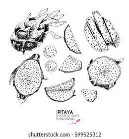 Vector hand drawn set of exotic fruits. Isolated pitaya. Engraved art. Delicious tropical vegetarian objects. Use for restaurant, menu, smoothie bowl, market, store, party decoration, meal