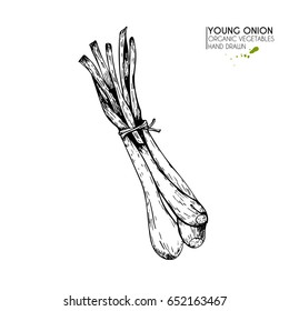 Vector hand drawn set of farm vegetables. Isolated srpouting onion. Engraved art. Organic sketched vegetarian objects. Use for restaurant, menu, grocery, market, store, party, meal