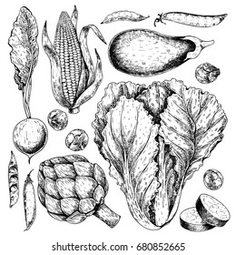 Vector hand drawn set of farm vegetables. Isolated radish, artichoke, cabbage, eggplant, corn, brussels sprout. Engraved art. Organic sketched objects. restaurant, menu, grocery market store party