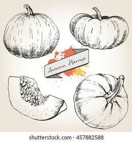 Vector hand drawn set illustration of pumpkin. Engraving autumn vegetable isolated on vintage background. Harvest for cooking.