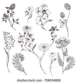 Vector hand drawn set with wild medicinal herbs. Hand drawn botanical sketch with plants and flowers. For print, card, wrapping and other natural herbal design. Black and white.