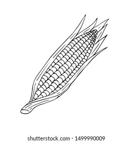 Vector hand drawn sketch corn isolated on white background