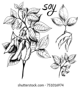 Vector hand drawn sketch set of soy. Ink botanical herbal illustration. Vegetarian and healthy food in vintage style for print, wrapping, menu, fabric and other design. Black and white.