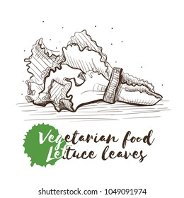 Vector hand drawn sketch of vegetarian food with food name. Eco food. Monochrome Letuce leaves isolated on white sketch.